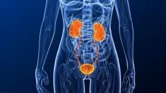 מערכת השתן בגוף האישה (אילוסטרציה)
