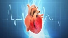 human heart (אילוסטרציה: shutterstock)