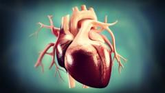 Human Heart (אילוסטרציה)