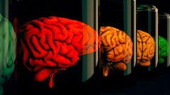 אילוסטרציה. מוחות במעבדה